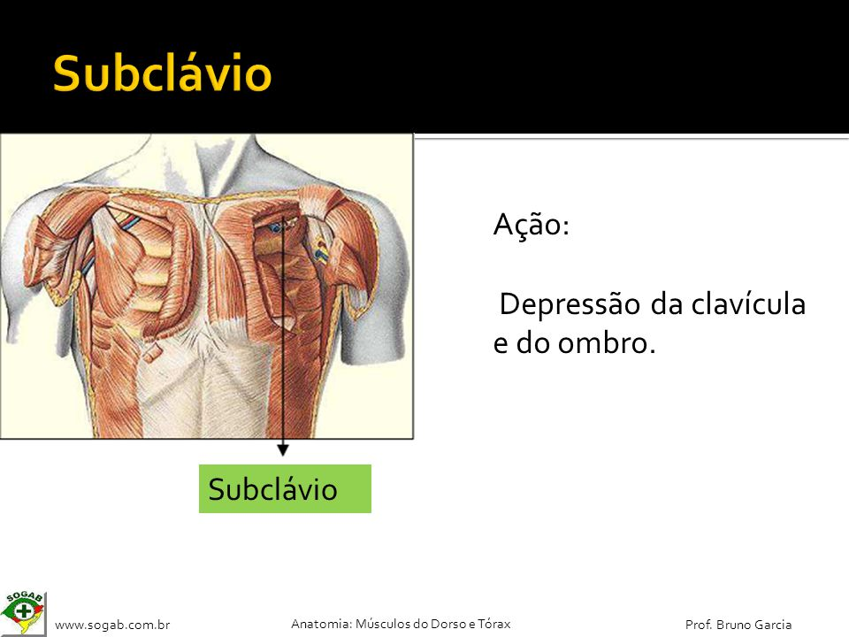 Subclávio Ação: Depressão da clavícula e do ombro. Subclávio