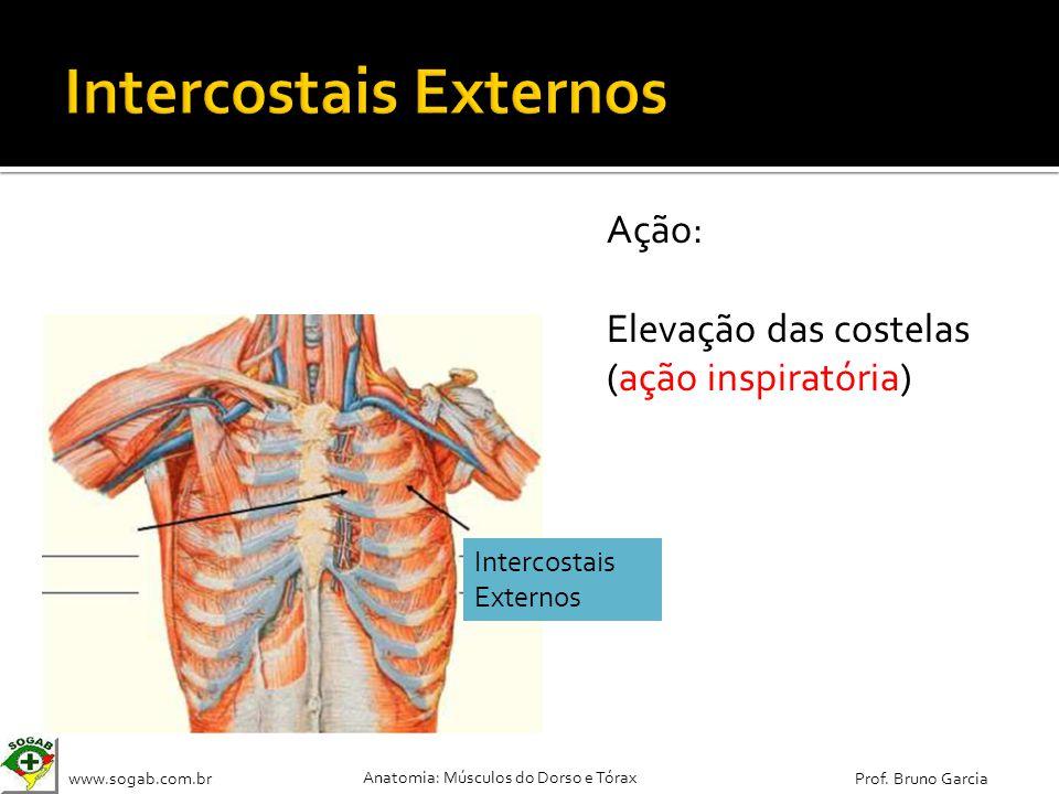 Intercostais Externos