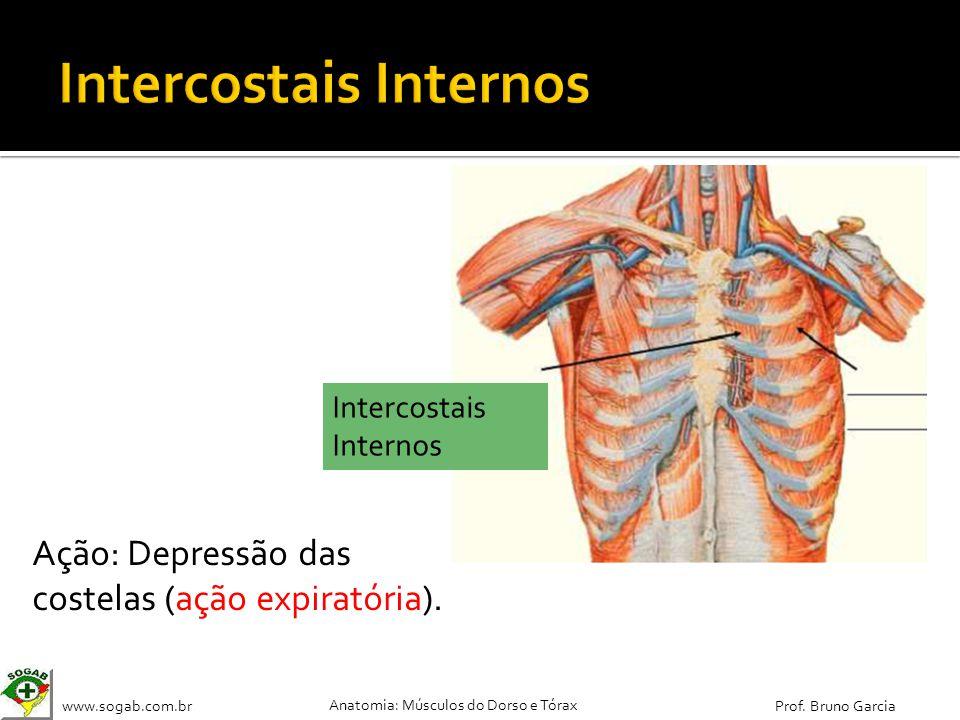 Intercostais Internos