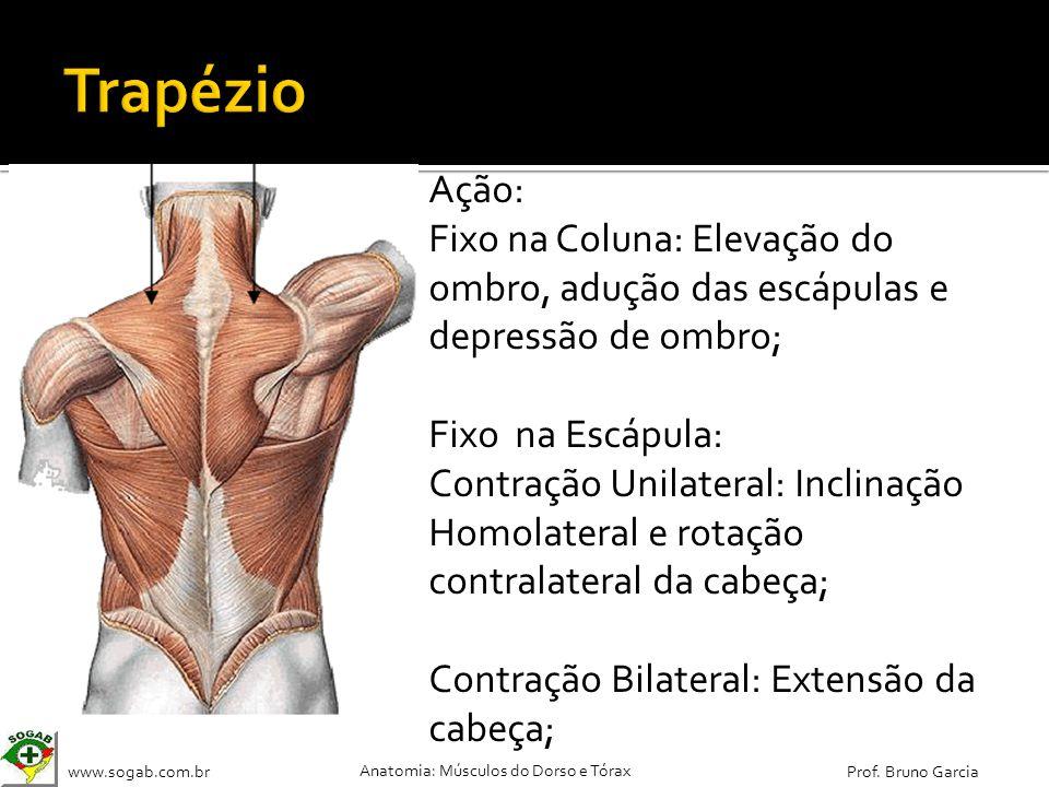 Trapézio Ação: Fixo na Coluna: Elevação do ombro, adução das escápulas e depressão de ombro; Fixo na Escápula: