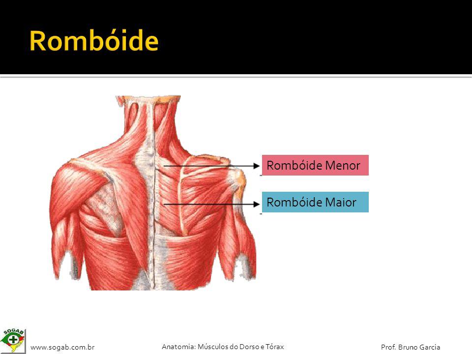 Rombóide Rombóide Menor Rombóide Maior