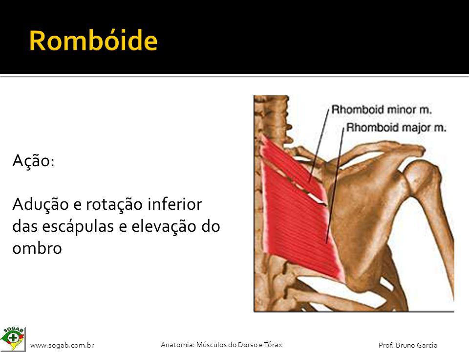 Rombóide Ação: Adução e rotação inferior das escápulas e elevação do ombro