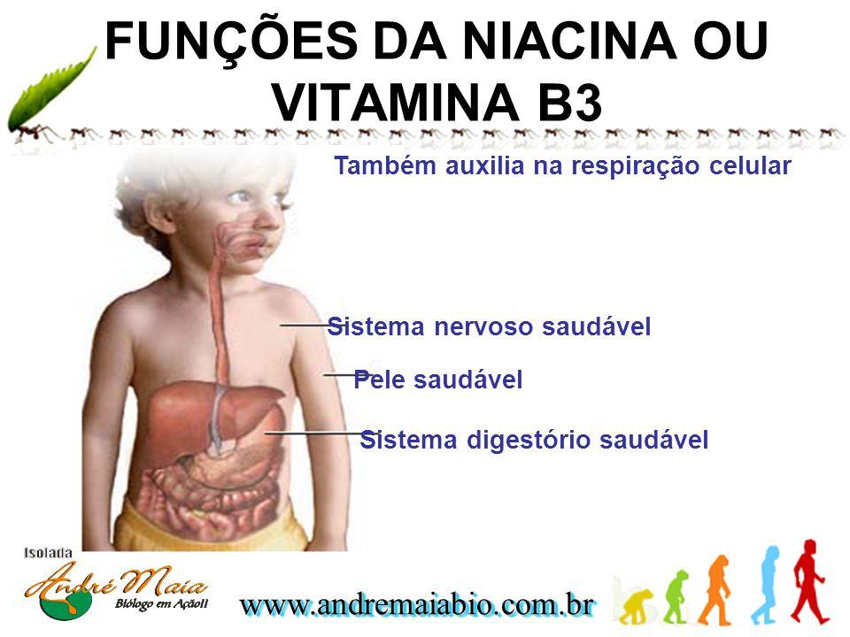 FUNÇÕES DA NIACINA OU VITAMINA B3