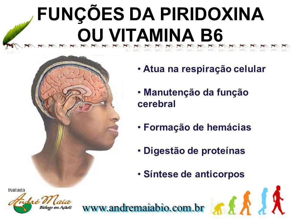 FUNÇÕES DA PIRIDOXINA OU VITAMINA B6
