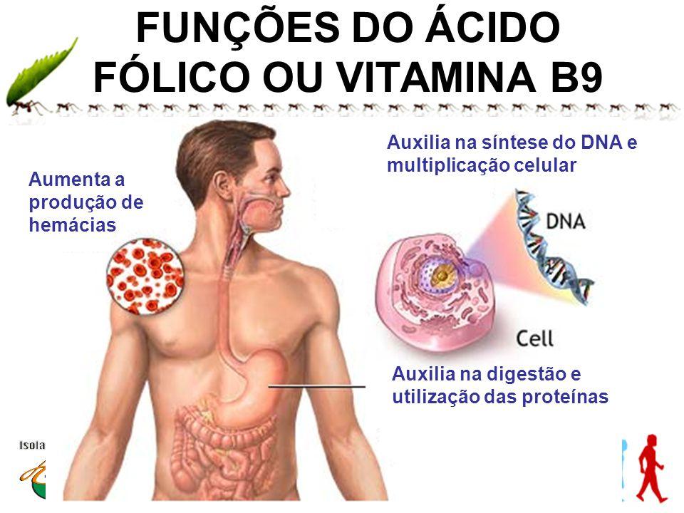 FUNÇÕES DO ÁCIDO FÓLICO OU VITAMINA B9