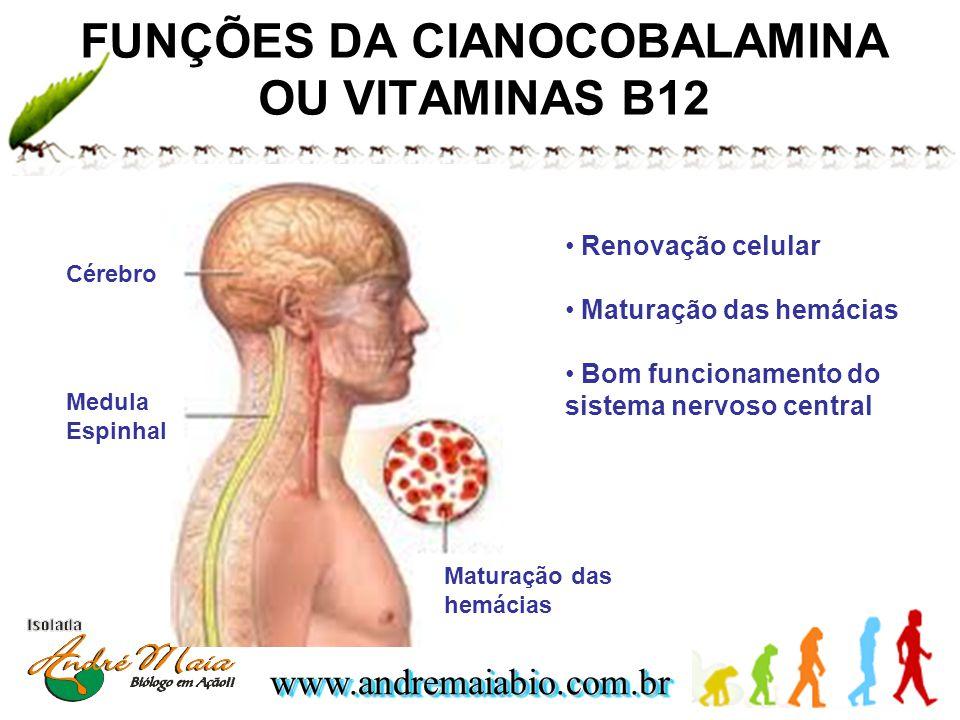 FUNÇÕES DA CIANOCOBALAMINA OU VITAMINAS B12
