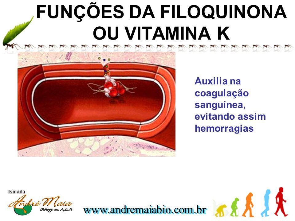 FUNÇÕES DA FILOQUINONA OU VITAMINA K