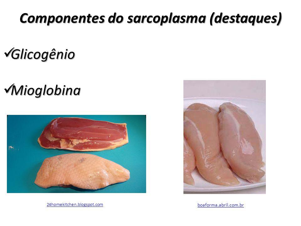 Componentes do sarcoplasma (destaques)