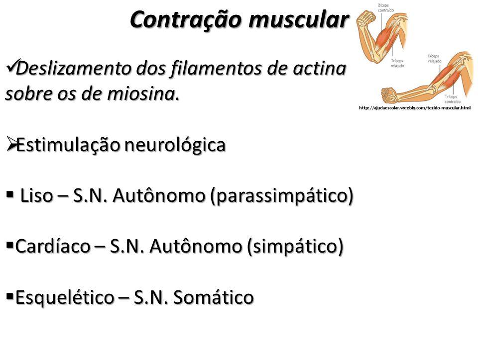 Contração muscular Deslizamento dos filamentos de actina sobre os de miosina. Estimulação neurológica.