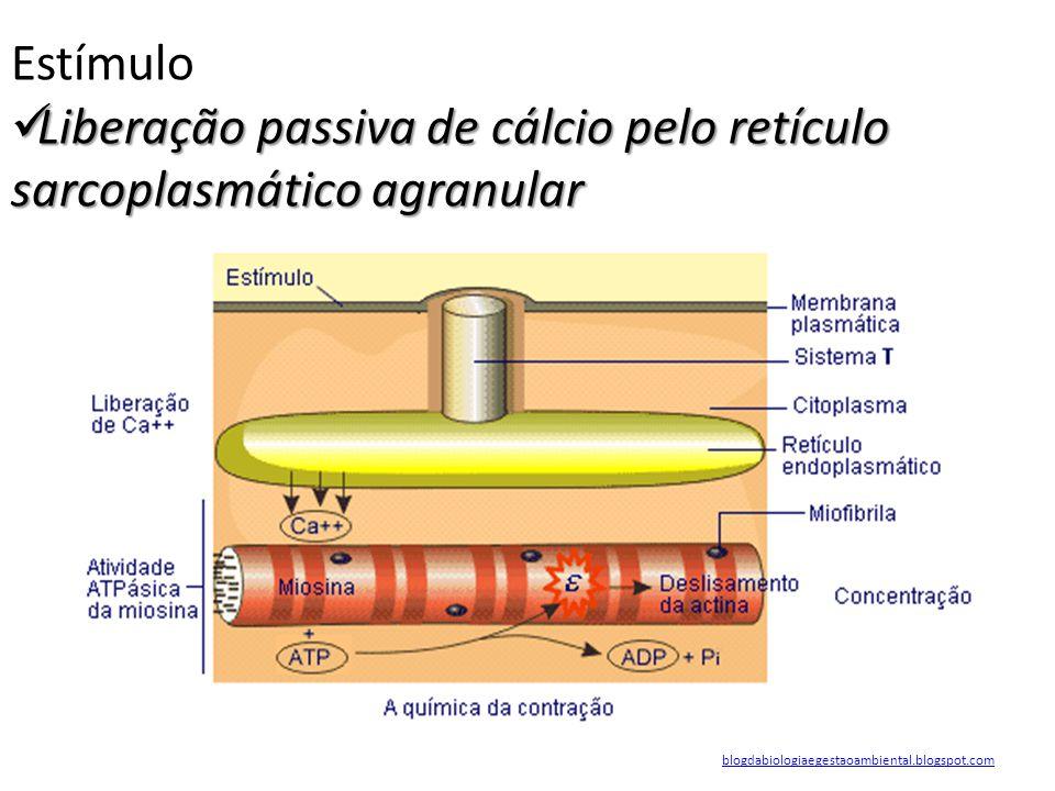 Liberação passiva de cálcio pelo retículo sarcoplasmático agranular