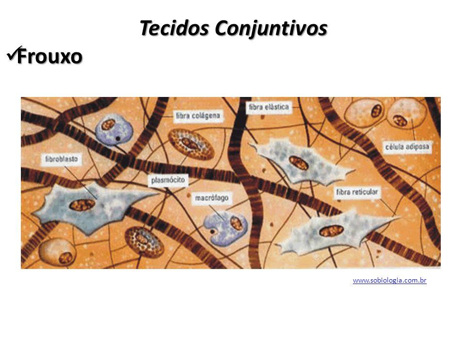 Tecidos Conjuntivos Frouxo www.sobiologia.com.br