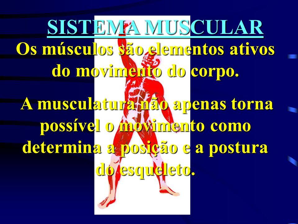 Os músculos são elementos ativos do movimento do corpo.