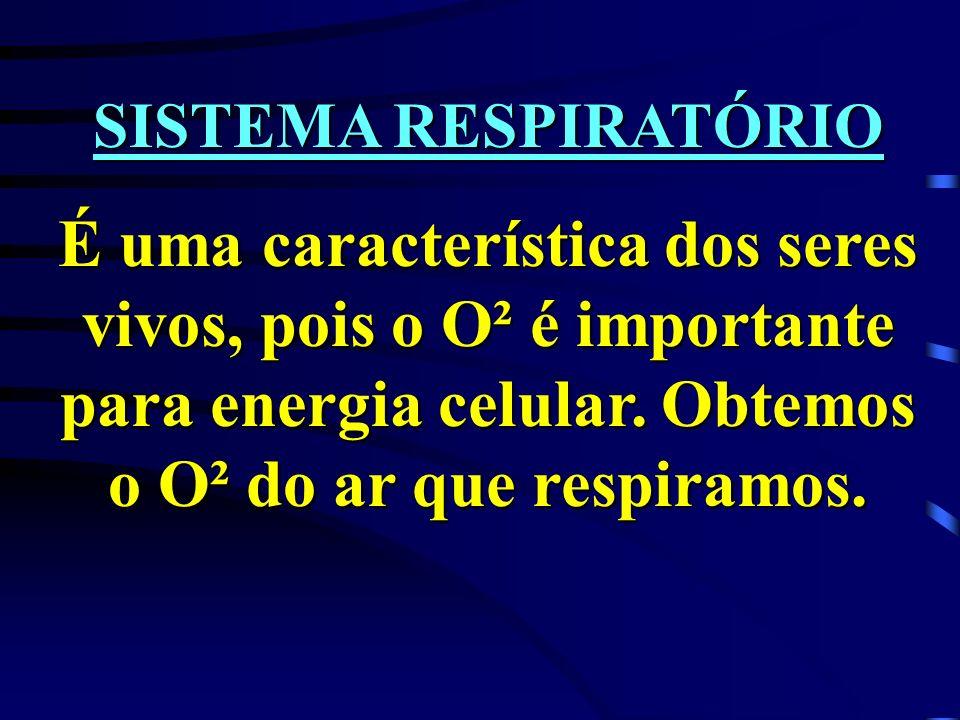 SISTEMA RESPIRATÓRIO É uma característica dos seres vivos, pois o O² é importante para energia celular.