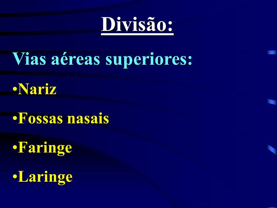 Divisão: Vias aéreas superiores: Nariz Fossas nasais Faringe Laringe