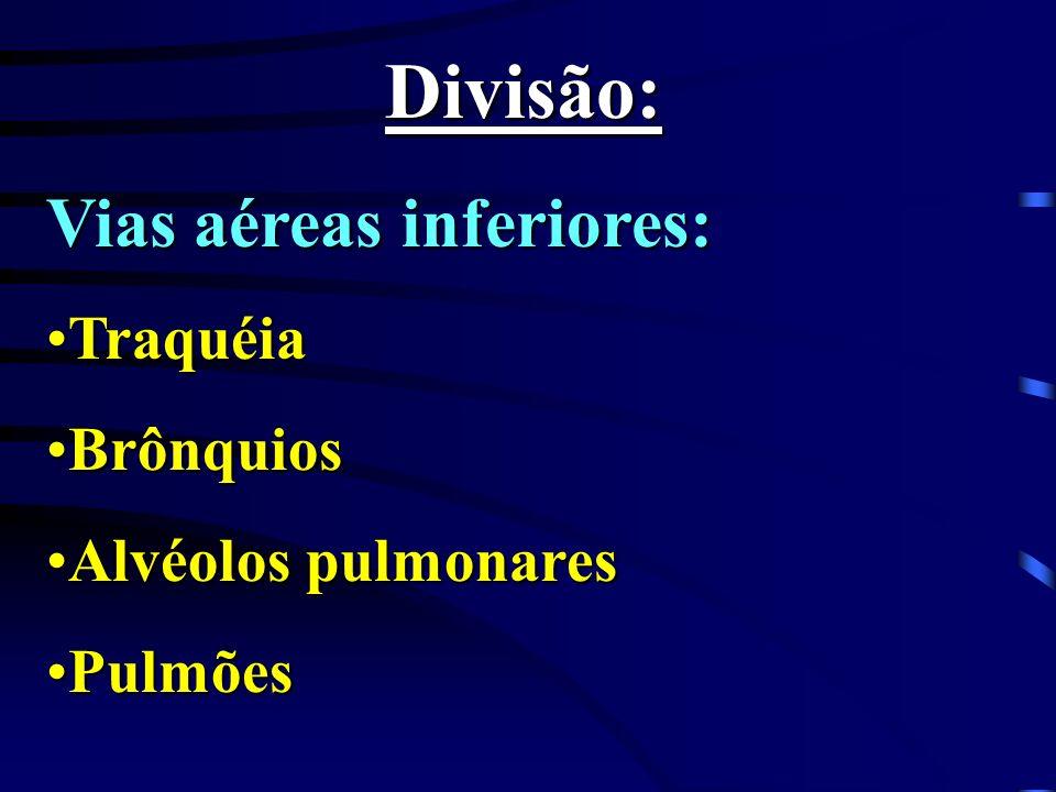 Divisão: Vias aéreas inferiores: Traquéia Brônquios