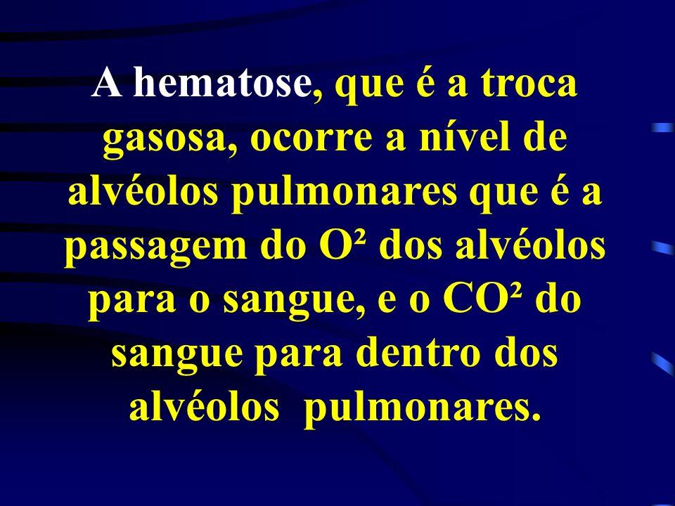 A hematose, que é a troca gasosa, ocorre a nível de alvéolos pulmonares que é a passagem do O² dos alvéolos para o sangue, e o CO² do sangue para dentro dos alvéolos pulmonares.