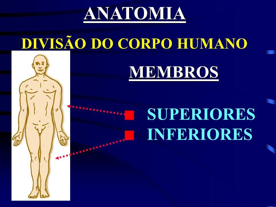 ANATOMIA DIVISÃO DO CORPO HUMANO: MEMBROS SUPERIORES INFERIORES