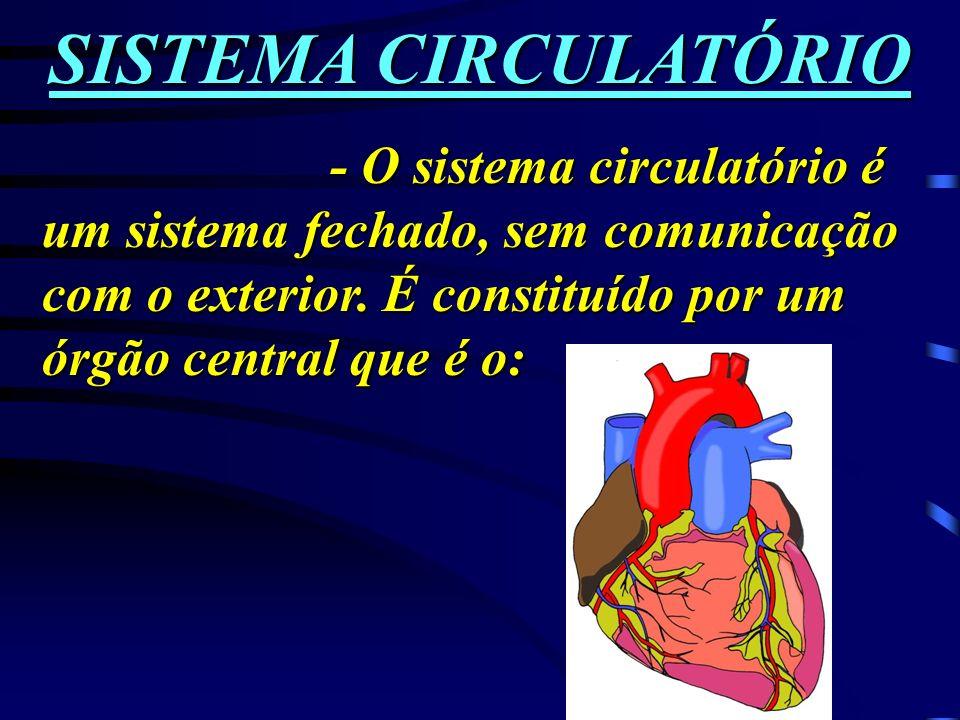 SISTEMA CIRCULATÓRIO- O sistema circulatório é um sistema fechado, sem comunicação com o exterior.