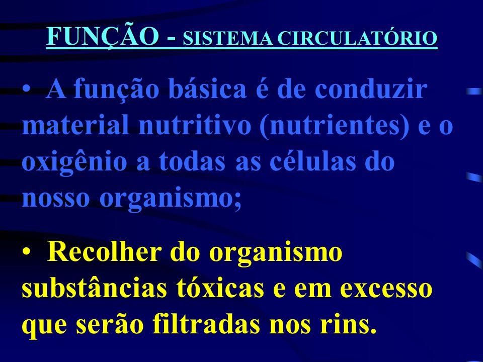 FUNÇÃO - SISTEMA CIRCULATÓRIO
