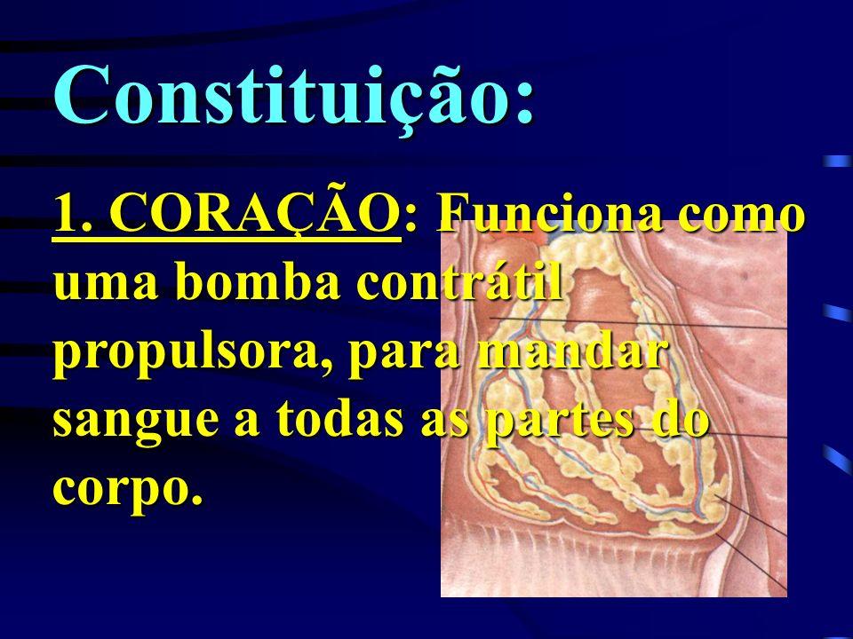 Constituição:1.