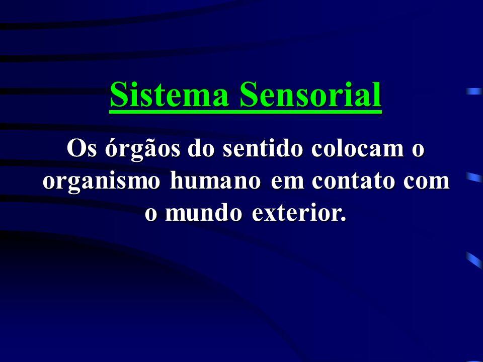 Sistema Sensorial Os órgãos do sentido colocam o organismo humano em contato com o mundo exterior.