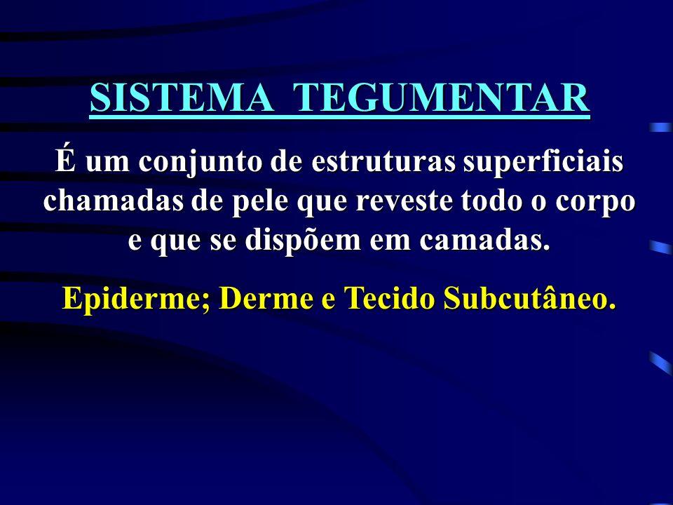 Epiderme; Derme e Tecido Subcutâneo.