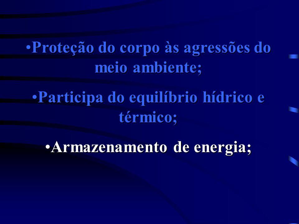 Proteção do corpo às agressões do meio ambiente;