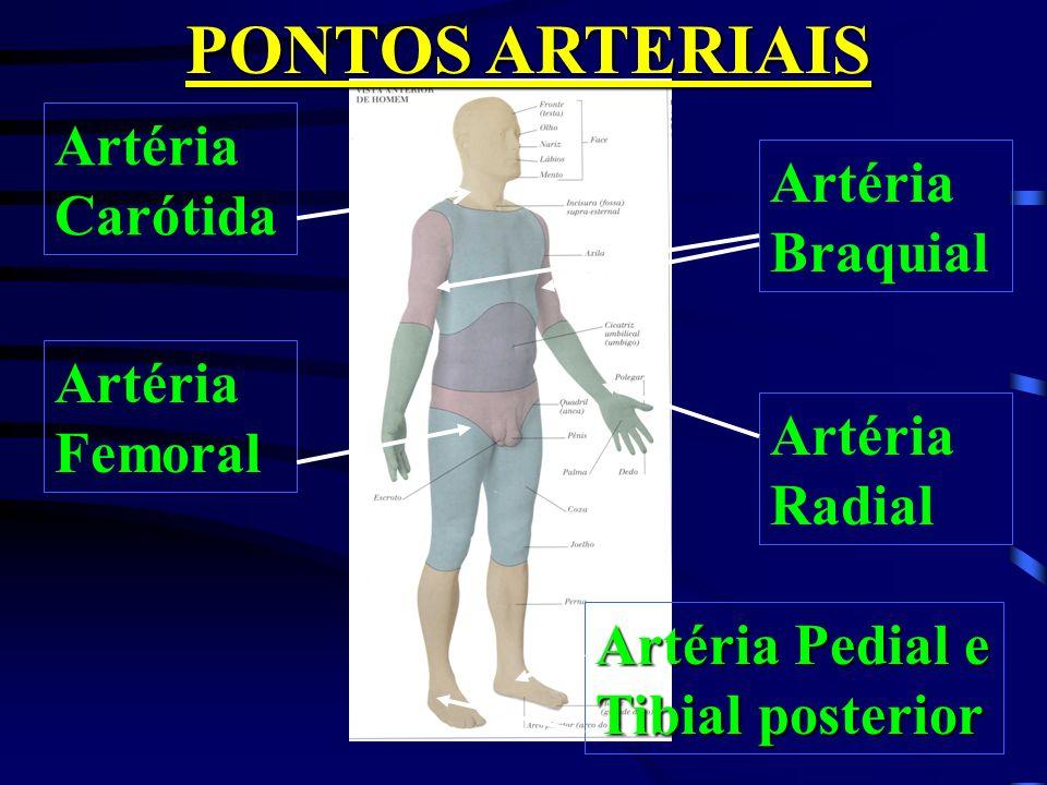 PONTOS ARTERIAIS Artéria Carótida Artéria Braquial Artéria Femoral
