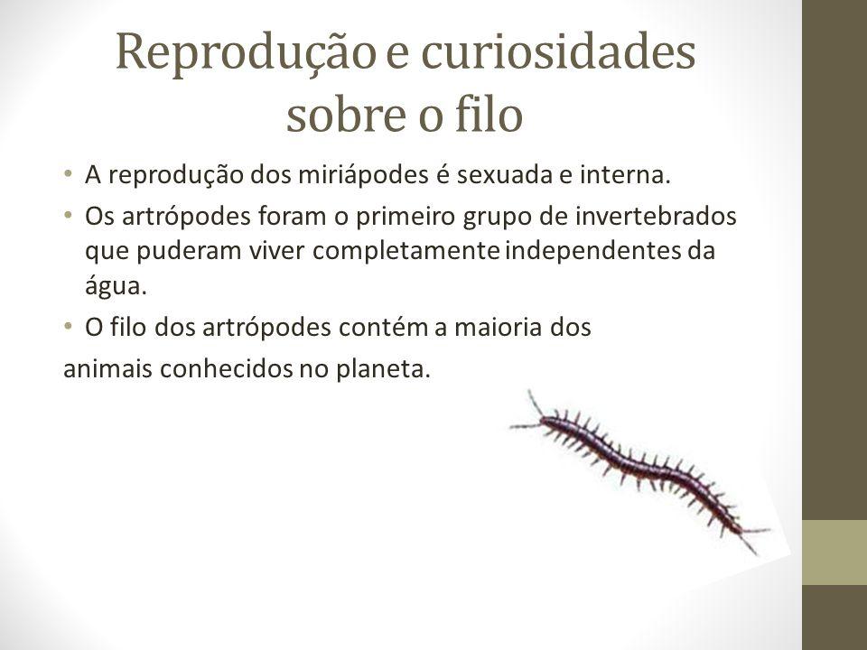 Reprodução e curiosidades sobre o filo