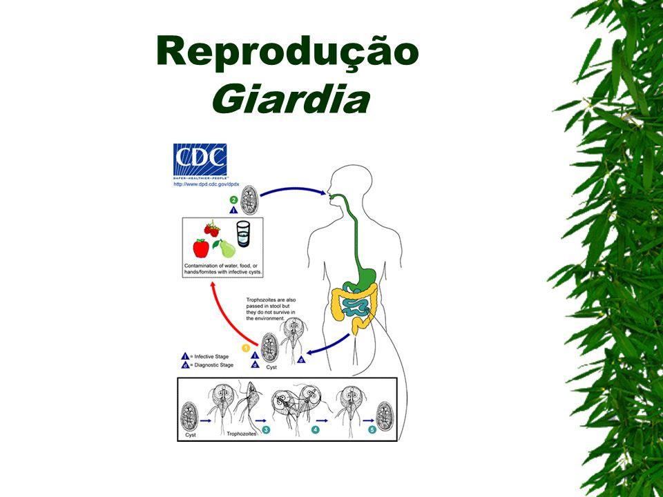 Reprodução Giardia