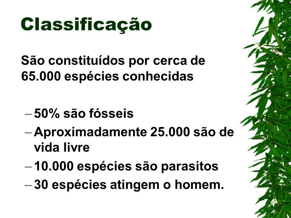 Classificação São constituídos por cerca de 65.000 espécies conhecidas
