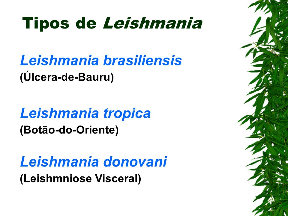 Tipos de Leishmania Leishmania brasiliensis Leishmania tropica