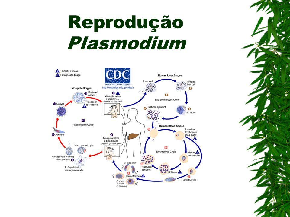 Reprodução Plasmodium
