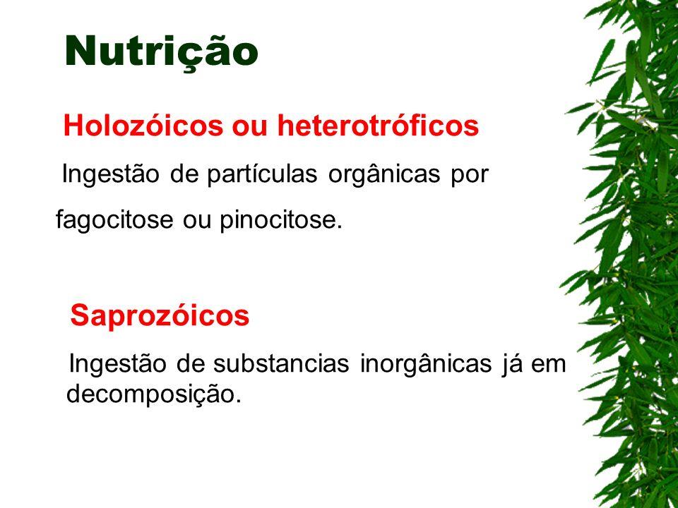Nutrição Holozóicos ou heterotróficos fagocitose ou pinocitose.