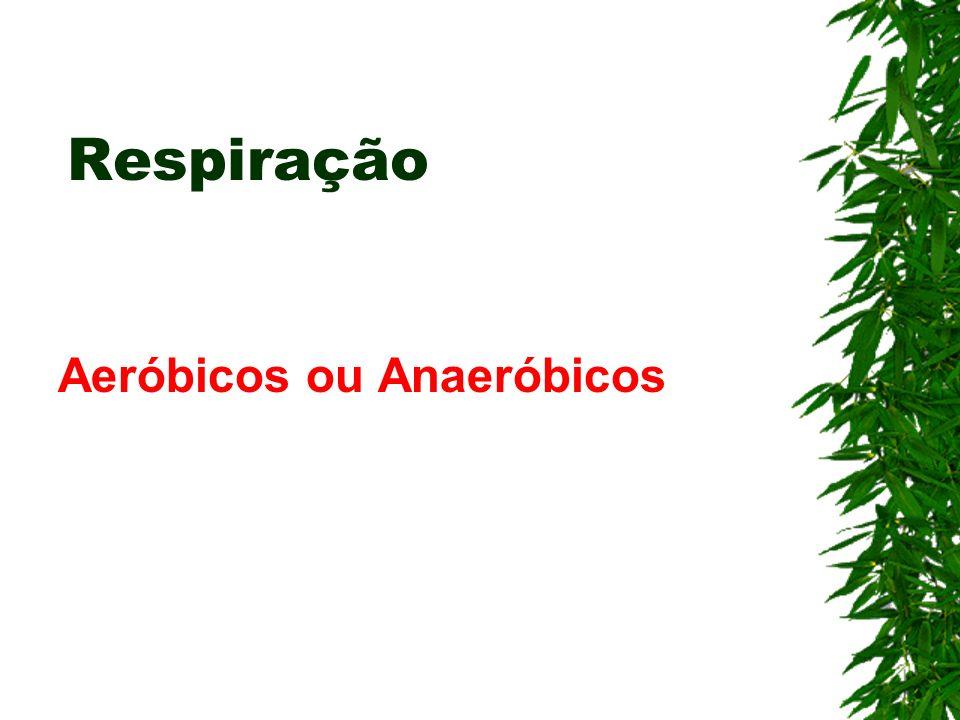 Respiração Aeróbicos ou Anaeróbicos