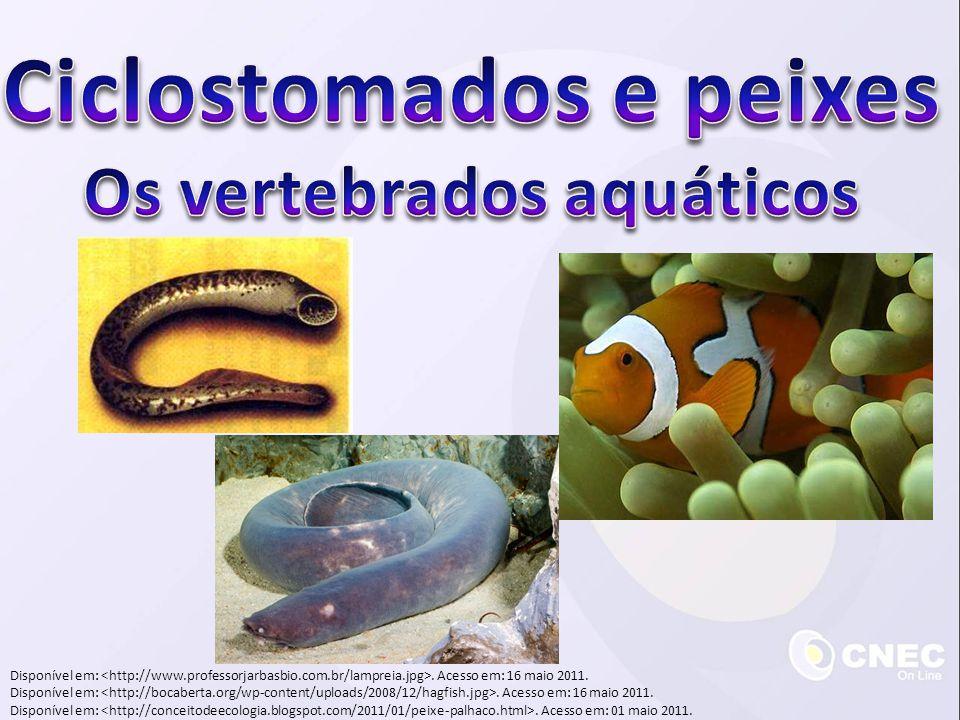Ciclostomados e peixes Os vertebrados aquáticos