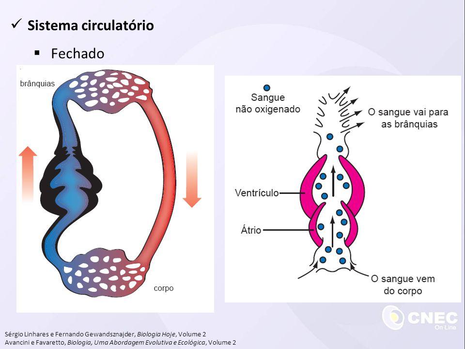 Sistema circulatório Fechado
