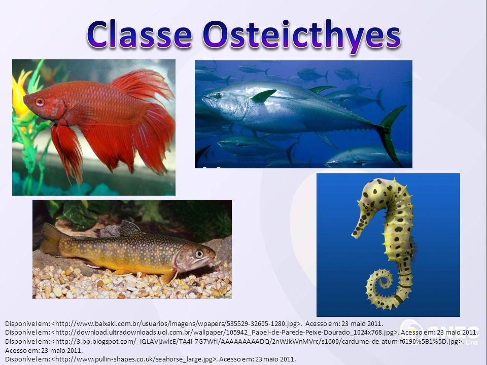 Classe Osteicthyes Disponível em: <http://www.baixaki.com.br/usuarios/imagens/wpapers/535529-32605-1280.jpg>. Acesso em: 23 maio 2011.