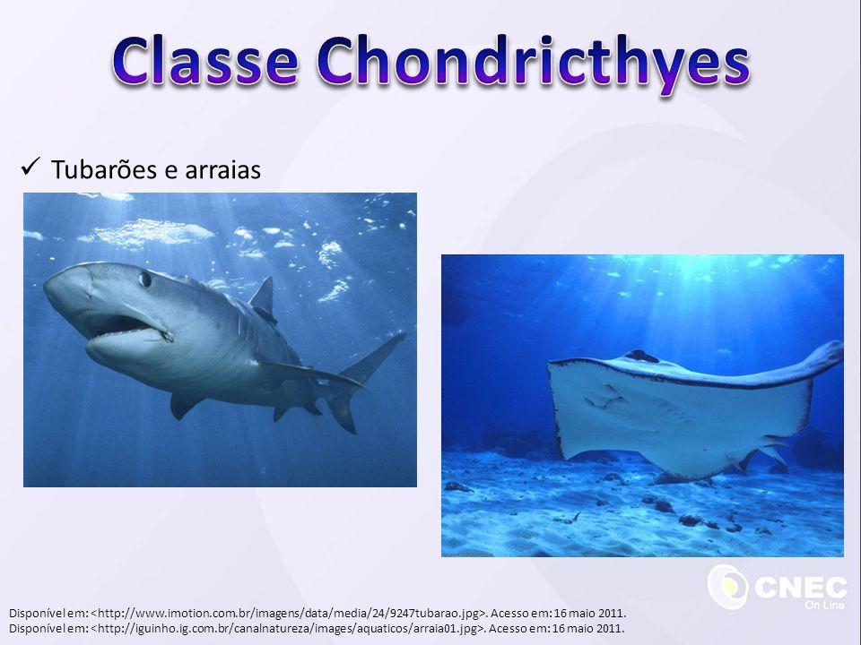 Classe Chondricthyes Tubarões e arraias