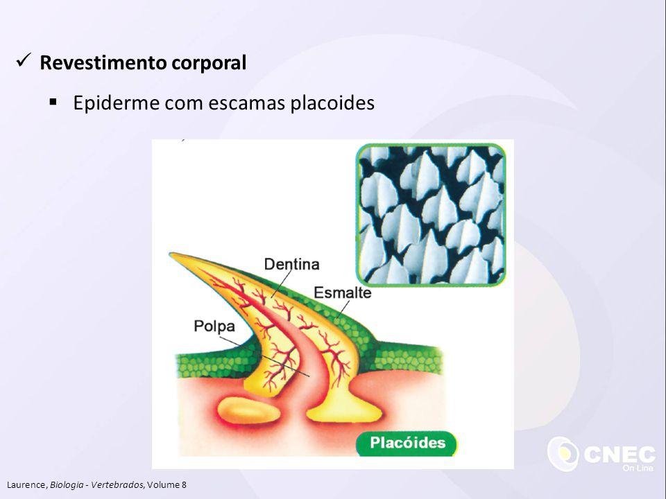 Revestimento corporal Epiderme com escamas placoides
