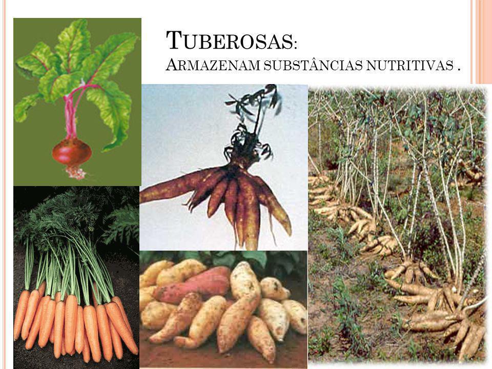Tuberosas: Armazenam substâncias nutritivas .