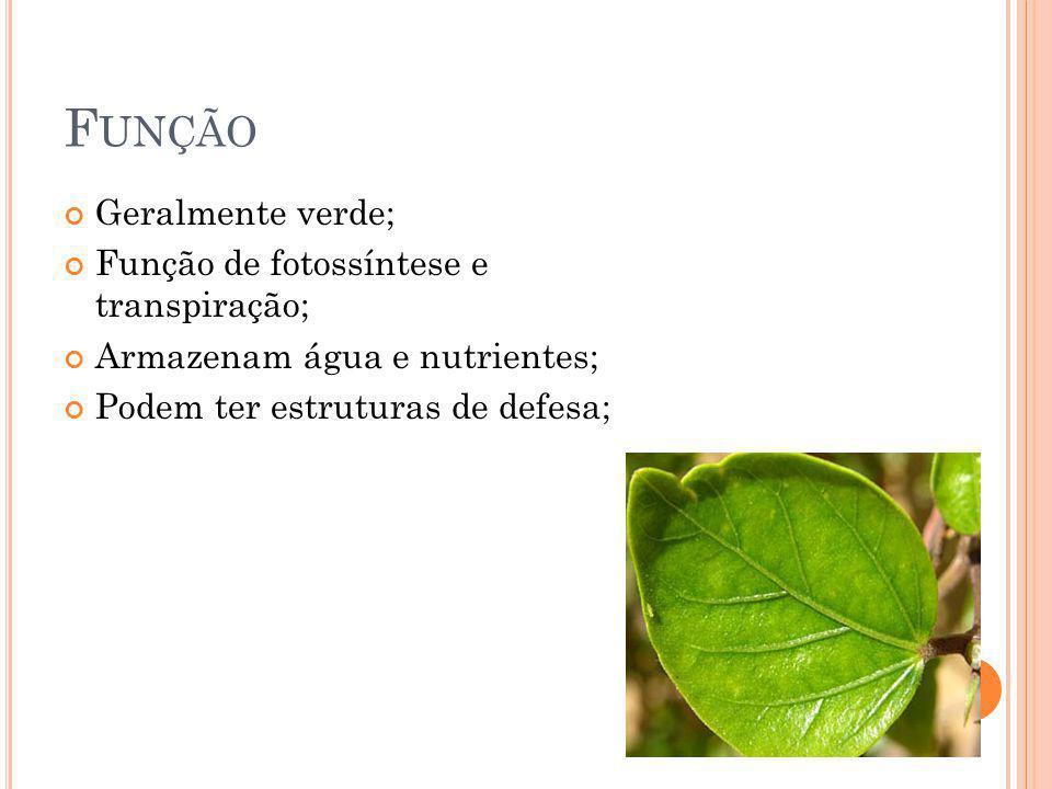 Função Geralmente verde; Função de fotossíntese e transpiração;