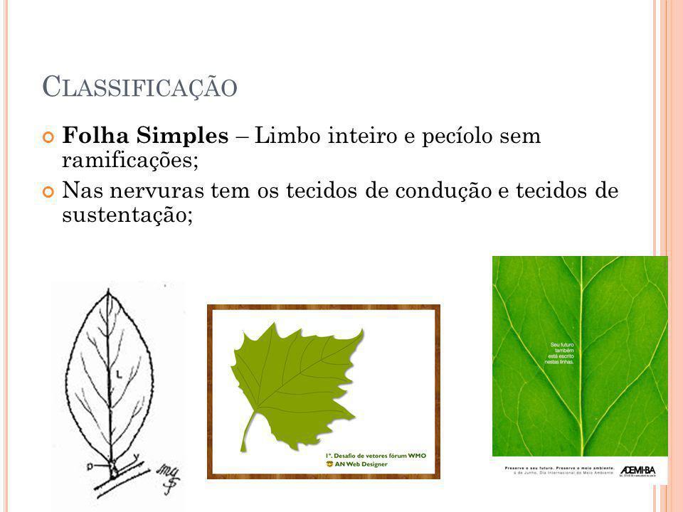Classificação Folha Simples – Limbo inteiro e pecíolo sem ramificações; Nas nervuras tem os tecidos de condução e tecidos de sustentação;