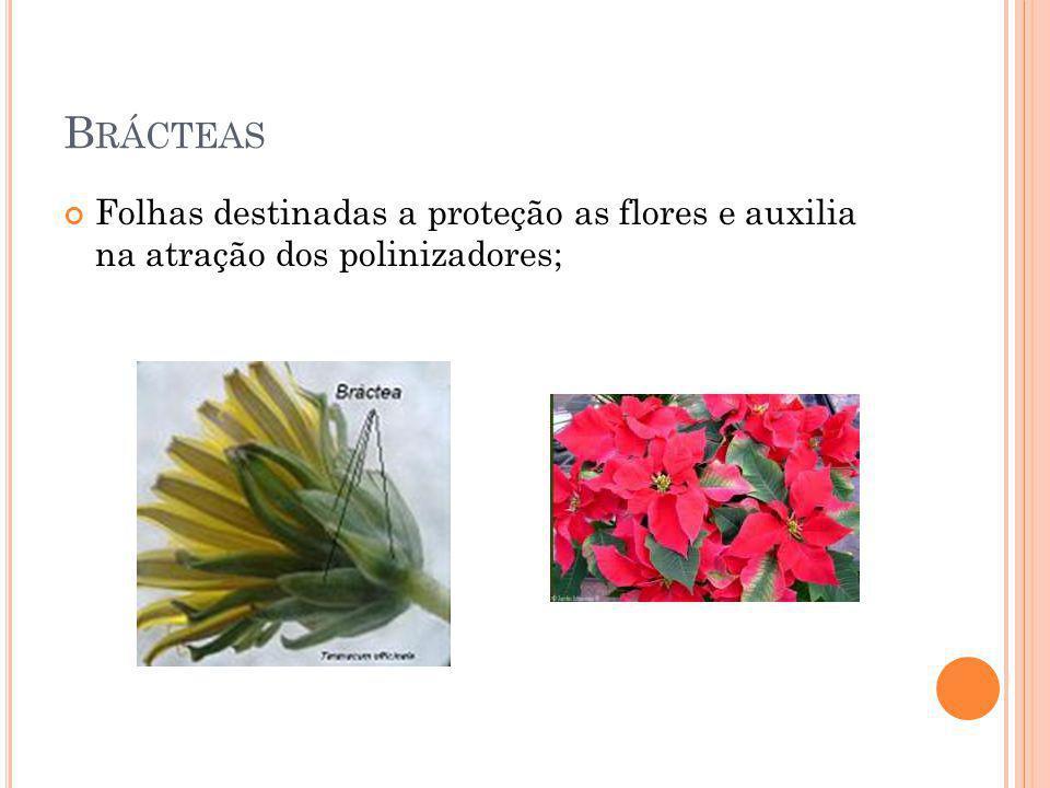Brácteas Folhas destinadas a proteção as flores e auxilia na atração dos polinizadores;