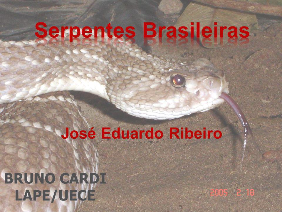 Serpentes Brasileiras