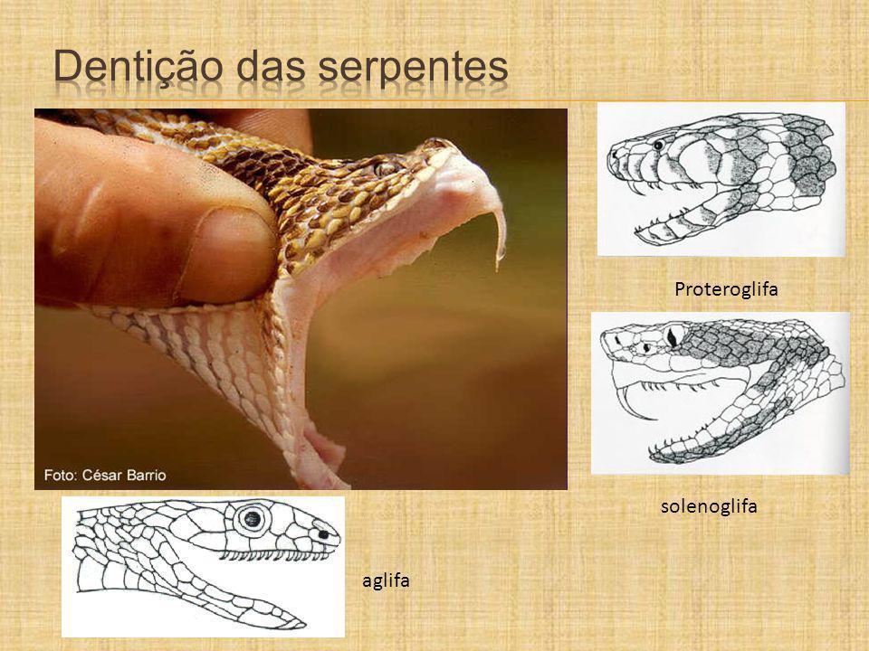 Dentição das serpentes