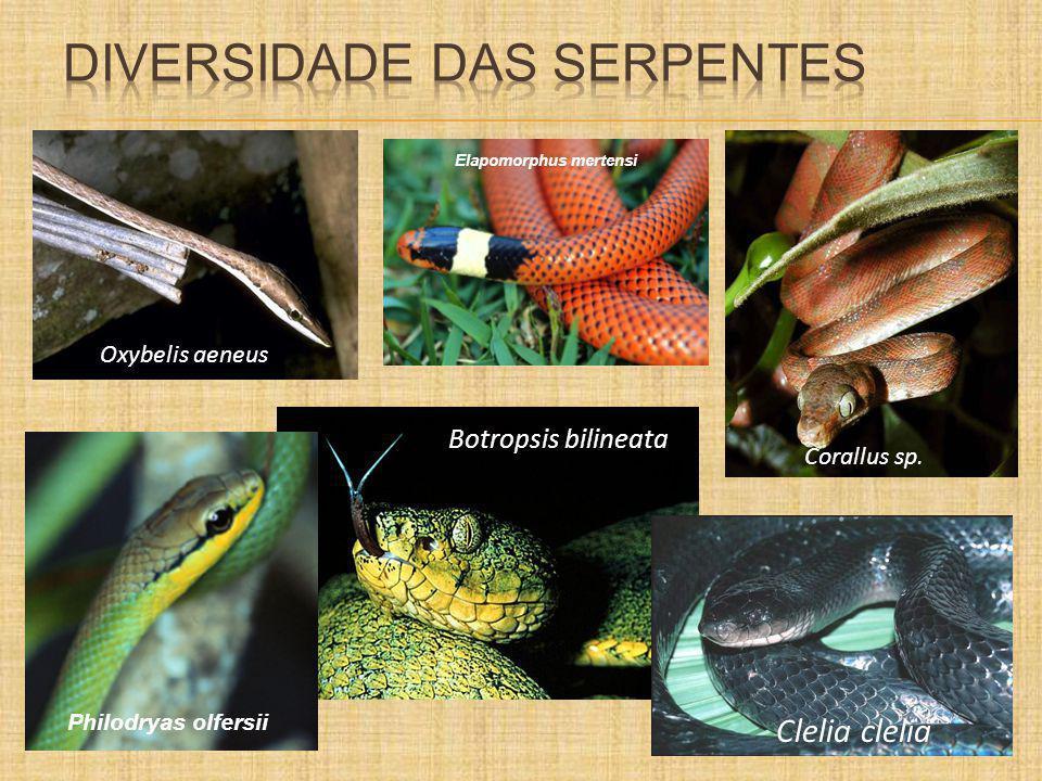 Diversidade das serpentes