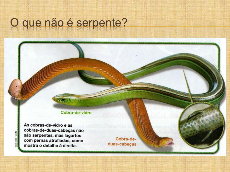 O que não é serpente