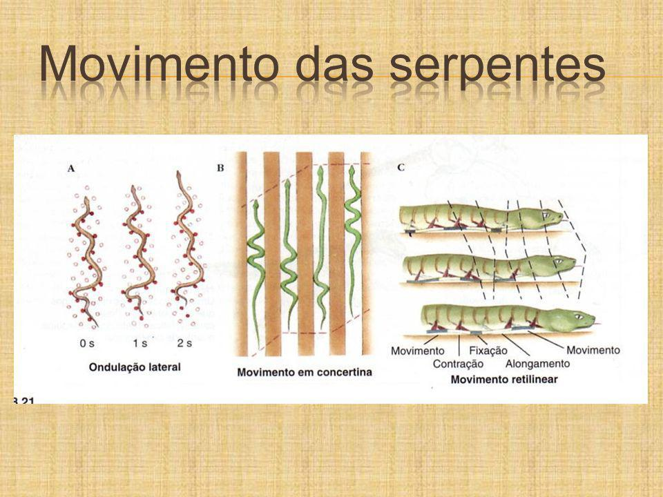 Movimento das serpentes