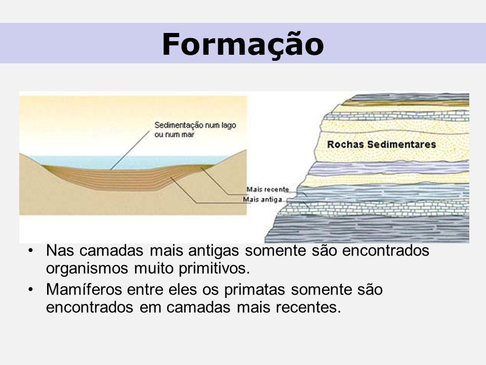 Formação Nas camadas mais antigas somente são encontrados organismos muito primitivos.
